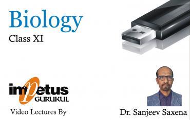Class XI Biology